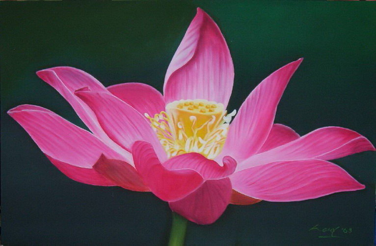 Lotus flower painted